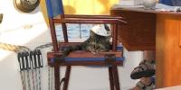 Bateau Melody chat