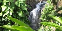 Végétation des Caraïbes